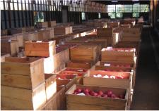 りんご農家の仕入れの様子